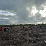 1,200 mangrove propagules from the OCENR planted