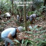 City plants 37k trees in reforestation project